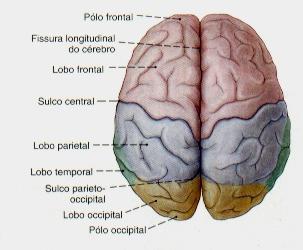 LobosCerebro1.jpg